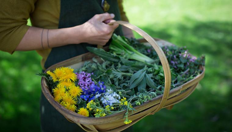 Aké bylinky zbierať v júni a ich účinky