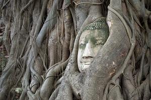 Bodhi – osvieti naše životy...