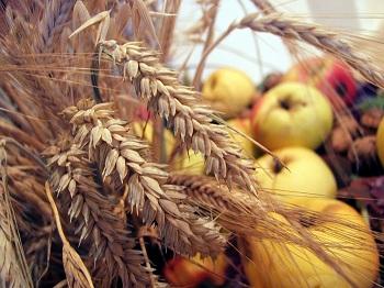V Čechách funguje skvelá firma na prírodnom základe – Country life