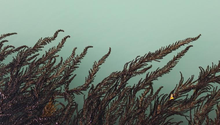 Účinky morských rias v anti-aging kozmetike