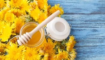 8 skvelých receptov z púpavy - využite jej liečivé účinky