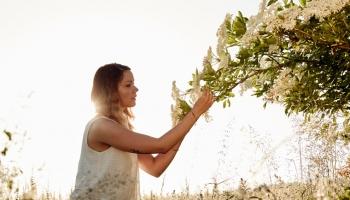 Aké bylinky zbierať v máji a ich účinky