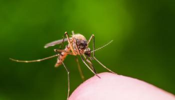 Porazte bodavý hmyz prírodne a bez chémie