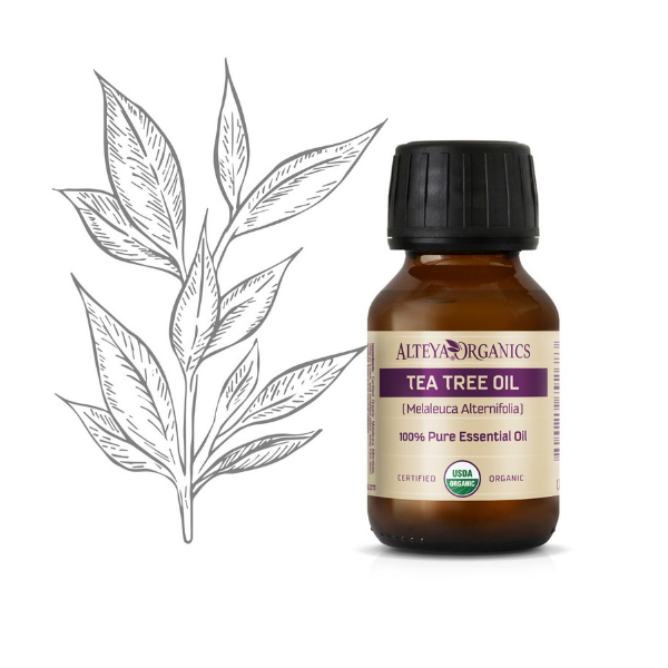Alteya Organics Tea Tree (čajovníkový) olej 100% Bio Alteya 50 ml 50 ml